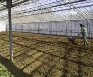 Come fare un orto e come preparare il terreno