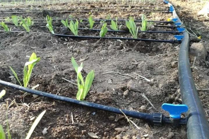 irrigazione automatica orto