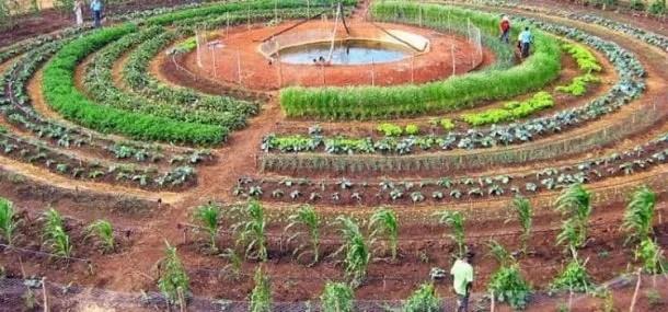 Come progettare un orto
