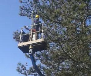 Processionaria del pino rimozione meccanica