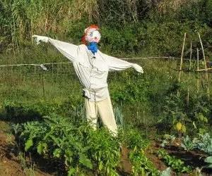 Come allontanare i piccioni e gli uccelli dall'orto - spaventapasseri