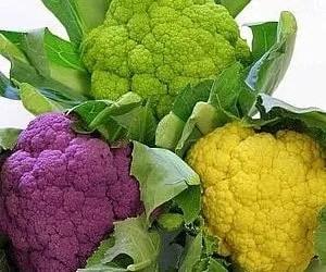 la coltivazione del cavolfiore diverse colorazioni
