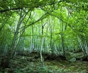 Il ciclo dell'acqua e la progettazione dell'orto in permacultura - bosco