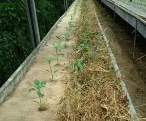 teli di juta per pacciamatura biodegradabile-orto-confronto