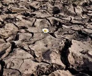 concimazione naturale-sovescio di leguminose-il degrado della terra