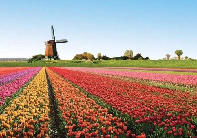 Come Piantare i Bulbi di Tulipano: 8 Passaggi