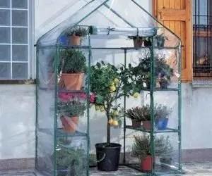 Come proteggere le piante dal gelo con la serra da terrazzo