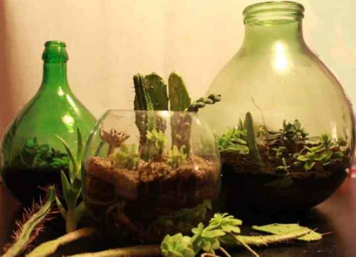 Composizione di piante grasse in vasi di vetro