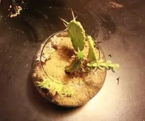 Composizione piante grasse in vetro sabbia