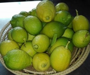 Limoni per la ricetta del limoncello fatto in casa