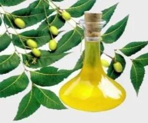 Olio di neem con azadiractina