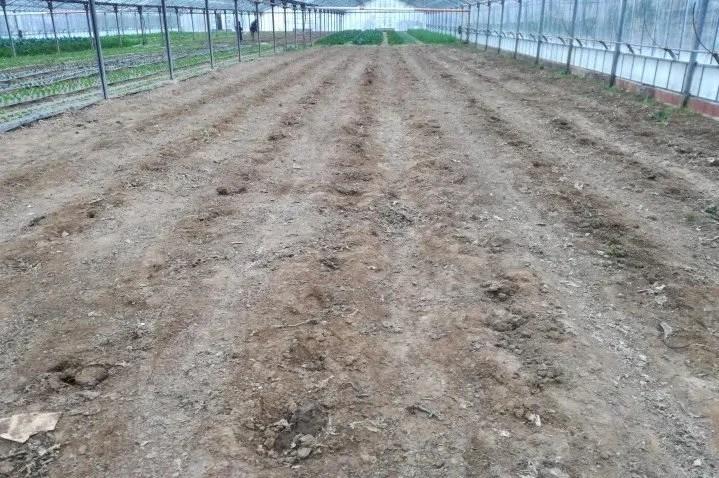 Terreno prima della lavorazione