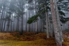 Biodiversità e sostenibilità ambientale Parco Nazionale della Sila