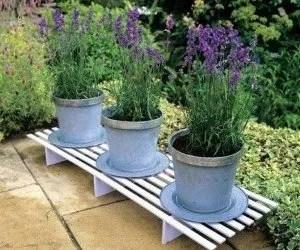 La pianta di lavanda la coltivazione biologica in for Pianta lavanda in vaso