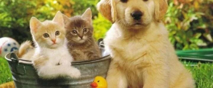 La fitoterapia nell'alimentazione di cani e gatti