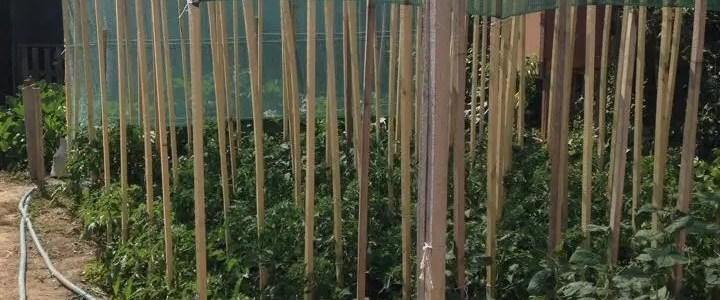 Rete ombreggiante, come difendere le piante dal caldo