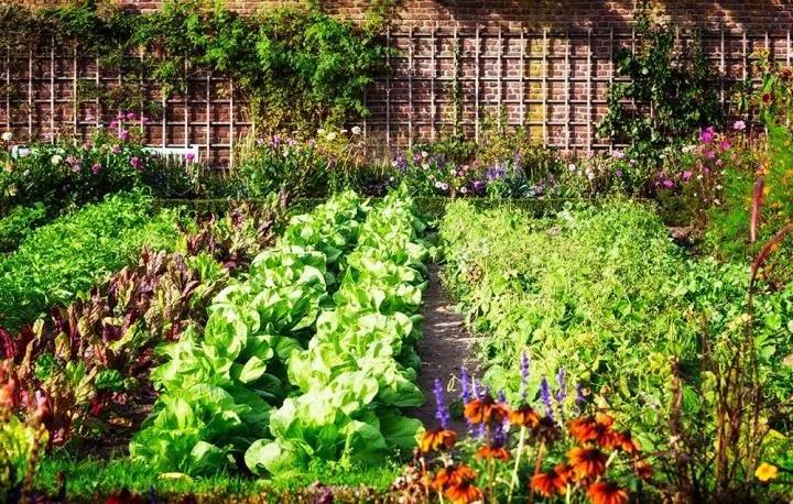Coltivare ortaggi biologici
