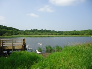 Qoile River, Downpatrick