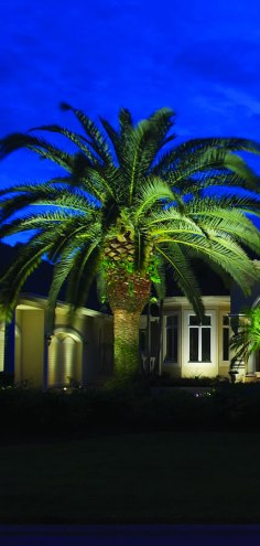 residential-olp_house-palm_005crop
