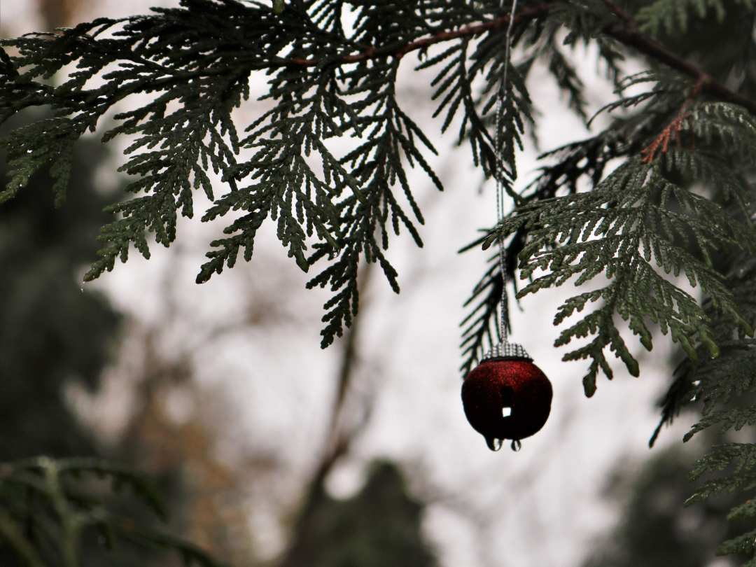 A red ornament on the 2020 Columbia Springs Holiday Giving Tree.