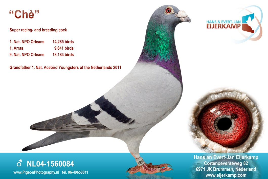 EijerkampChewNL04-1560084