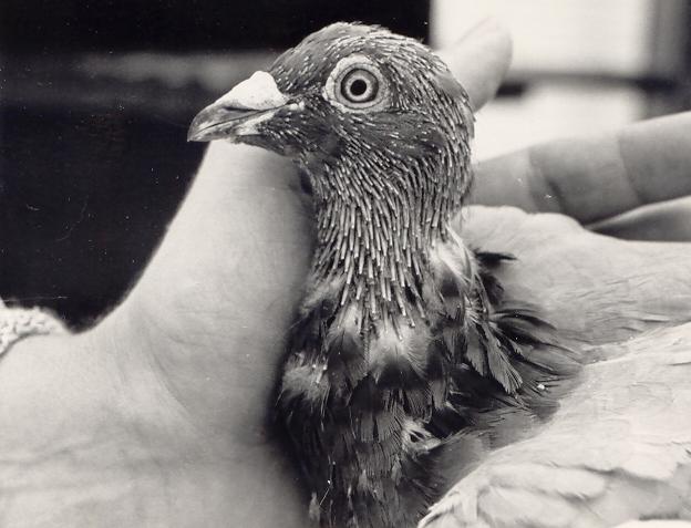 eb24moultingbird