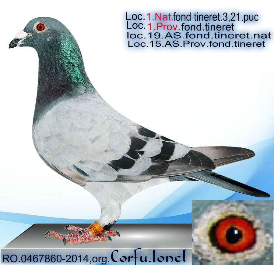 corfu-ionel-2
