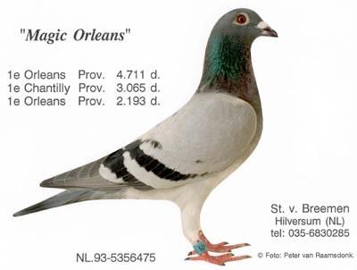http://www.stevenvanbreemen.nl/images/historie9.9-7669_magicorleans.jpg