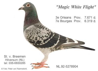 http://www.stevenvanbreemen.nl/images/1.23-8060_magicwhiteflight.jpg