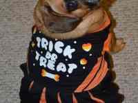 halloween pet parade
