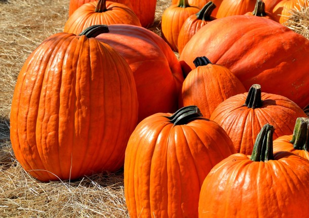 fall and halloween in columbus pumpkin workout