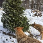 Christmas with the Critters at Ohio Wildlife Center