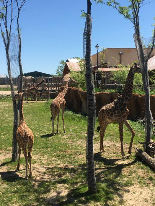 Www Bing Com1 Microsoft Way Redmond: Free Admission To Columbus Zoo: Military Family Free Dayz