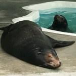 Sea lion habitat coming to the Columbus Zoo