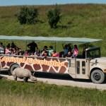 Safari in Ohio: Take a Wilds Tour!
