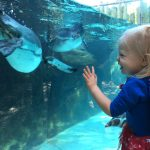 Columbus Zoo and Aquarium Boo at the Zoo