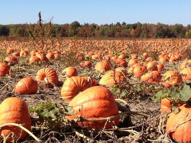 columbus pumpkin patches