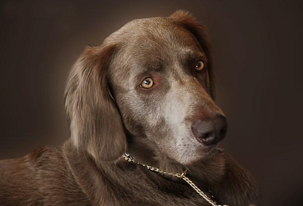 dog pixabay