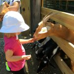 Caverns, animals, and more at Olentangy Indian Caverns