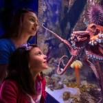 Free admission at Newport Aquarium for military