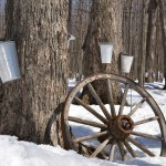 Maple Syrup tours and events in Columbus