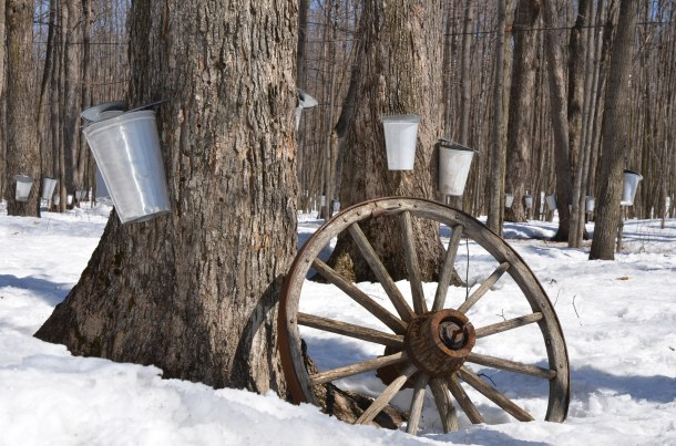 maple syrup, weekend in columbus