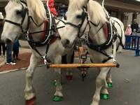 gahanna horses parade