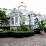 Brighten your day with the Orchids exhibit at Franklin Park Conservatory