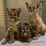 Columbus Zoo tickets and discounts, plus new babies and rescues!