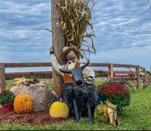 trail of scarecrows