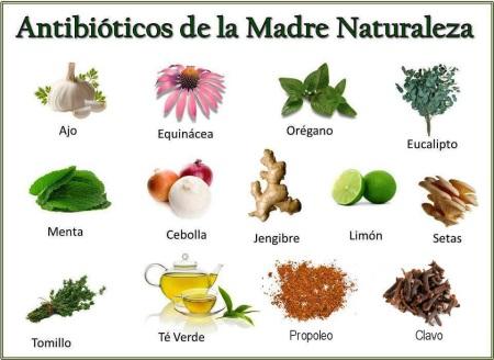 Antibioticos Naturales por Mercedes Carandini