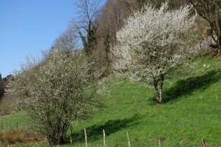 Le printemps s'invite à la Combe Tabeillon