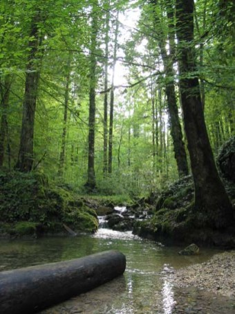 Au fil du ruisseau du Tabeillon