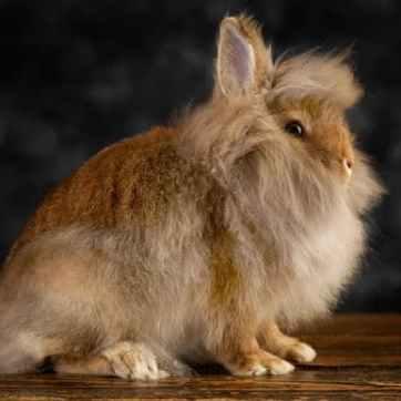 cuantas-razas-de-conejos-hay-2_opt